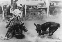 Jesse James Quarter Horse Stallion